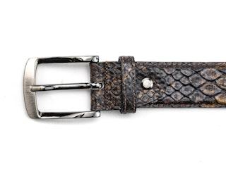 Belt snake fantasy brown
